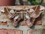 Schmetterlinge, Tiere und Pflanzen