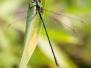 Makrofotografie und Insekten