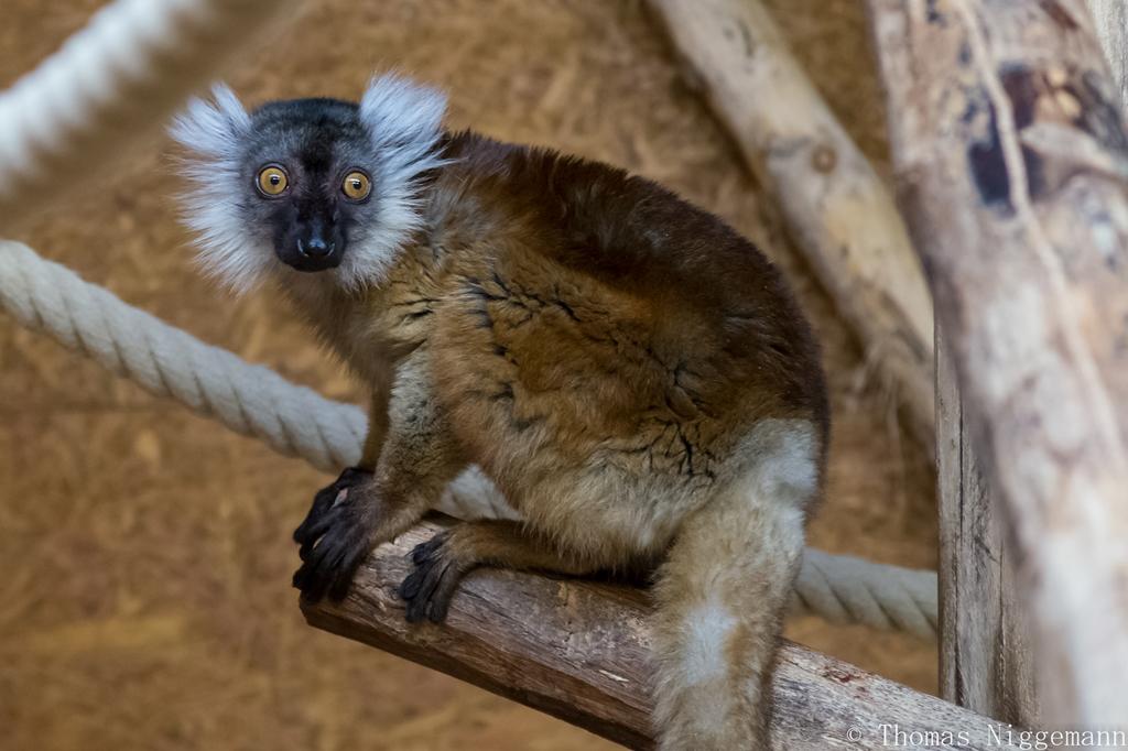 Zoo_Rheine_02_2018_005