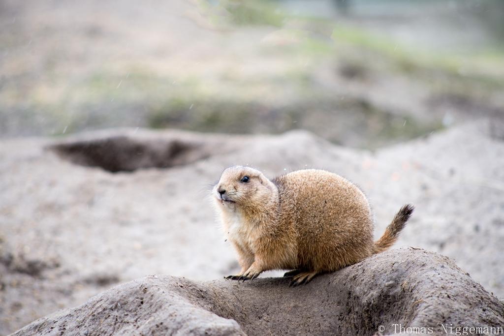 Zoo_Rheine_02_2018_007