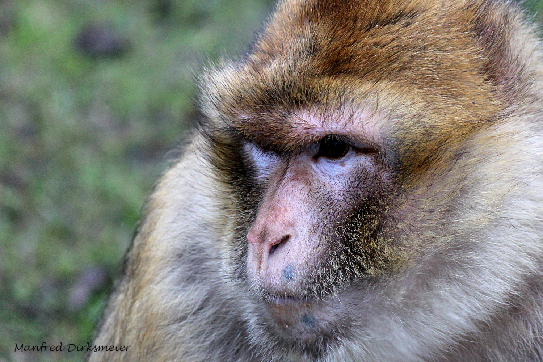 Zoo_Rheine_02_2018_010