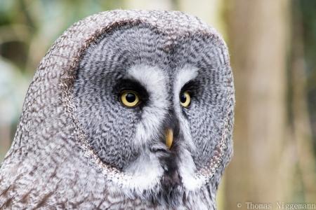 Zoo_Rheine_02_2018_001