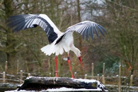 Zoo_Rheine_02_2018_003