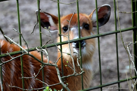 Zoo_Rheine_02_2018_013