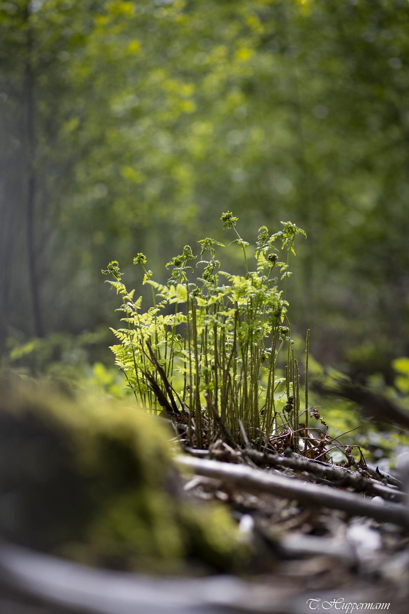 1_Fruehling-im-Wald_06-1_2021_001
