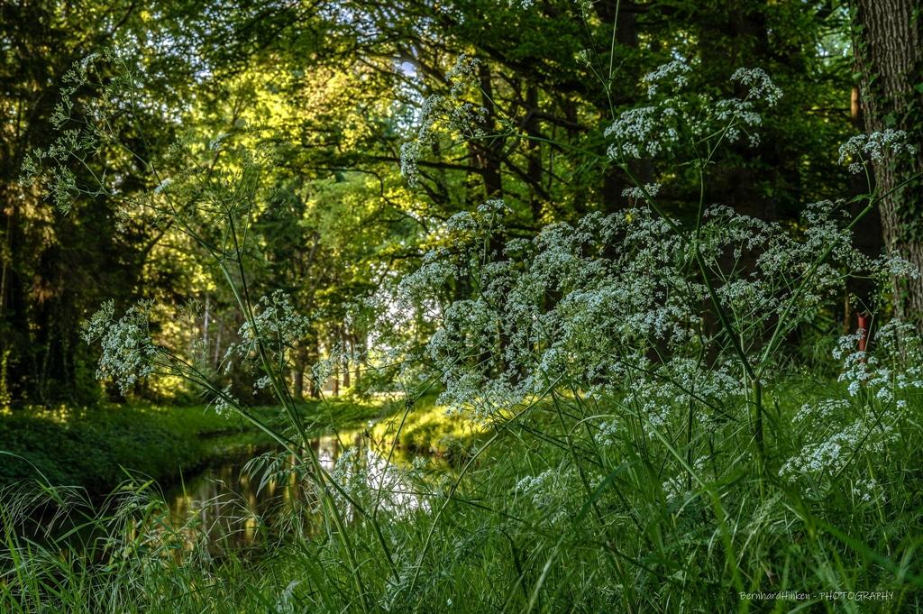 Fruehling-im-Wald_06-1_2021_011