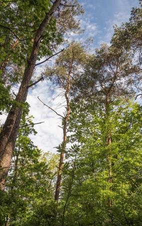 Fruehling-im-Wald_06-1_2021_005