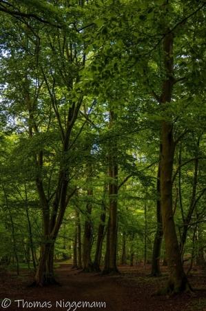 Fruehling-im-Wald_06-1_2021_006