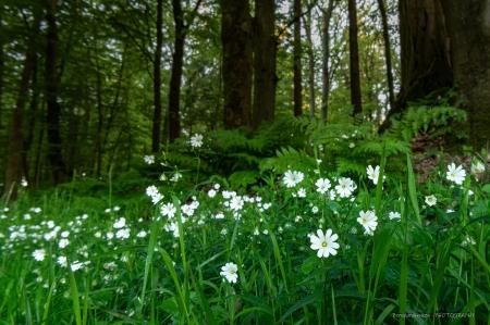 Fruehling-im-Wald_06-1_2021_010