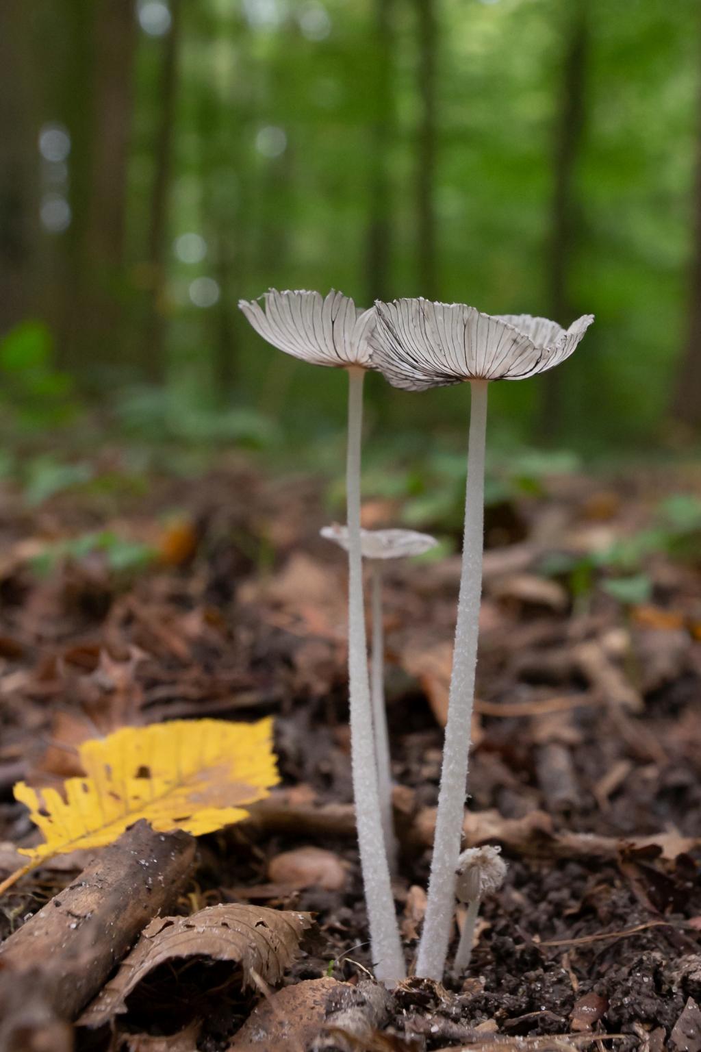 Pilze-und-Herbst_10_2020_004