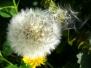 MS - Blumen