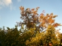 MS - Herbst