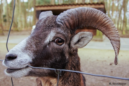 MS - Tiere_04_2018_001