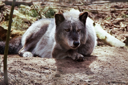 MS - Tiere_04_2018_006