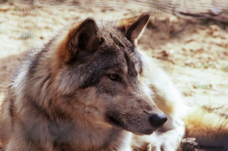 MS - Tiere_04_2018_007
