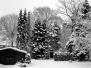 MS - Winter