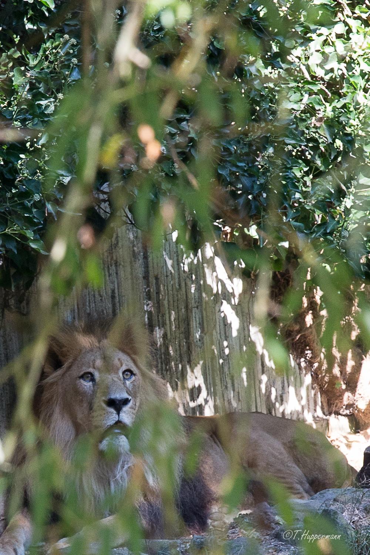 Zoo_2016_09_005