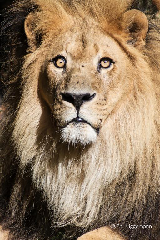 Zoo_2016_09_011