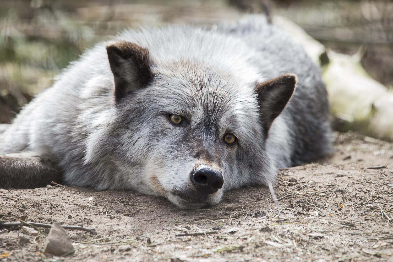 Wildpark_Ladbergen_04_2018_002