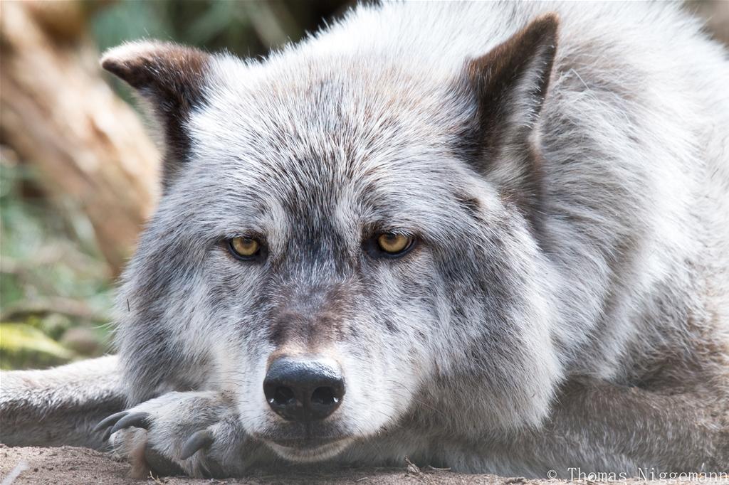 Wildpark_Ladbergen_04_2018_017