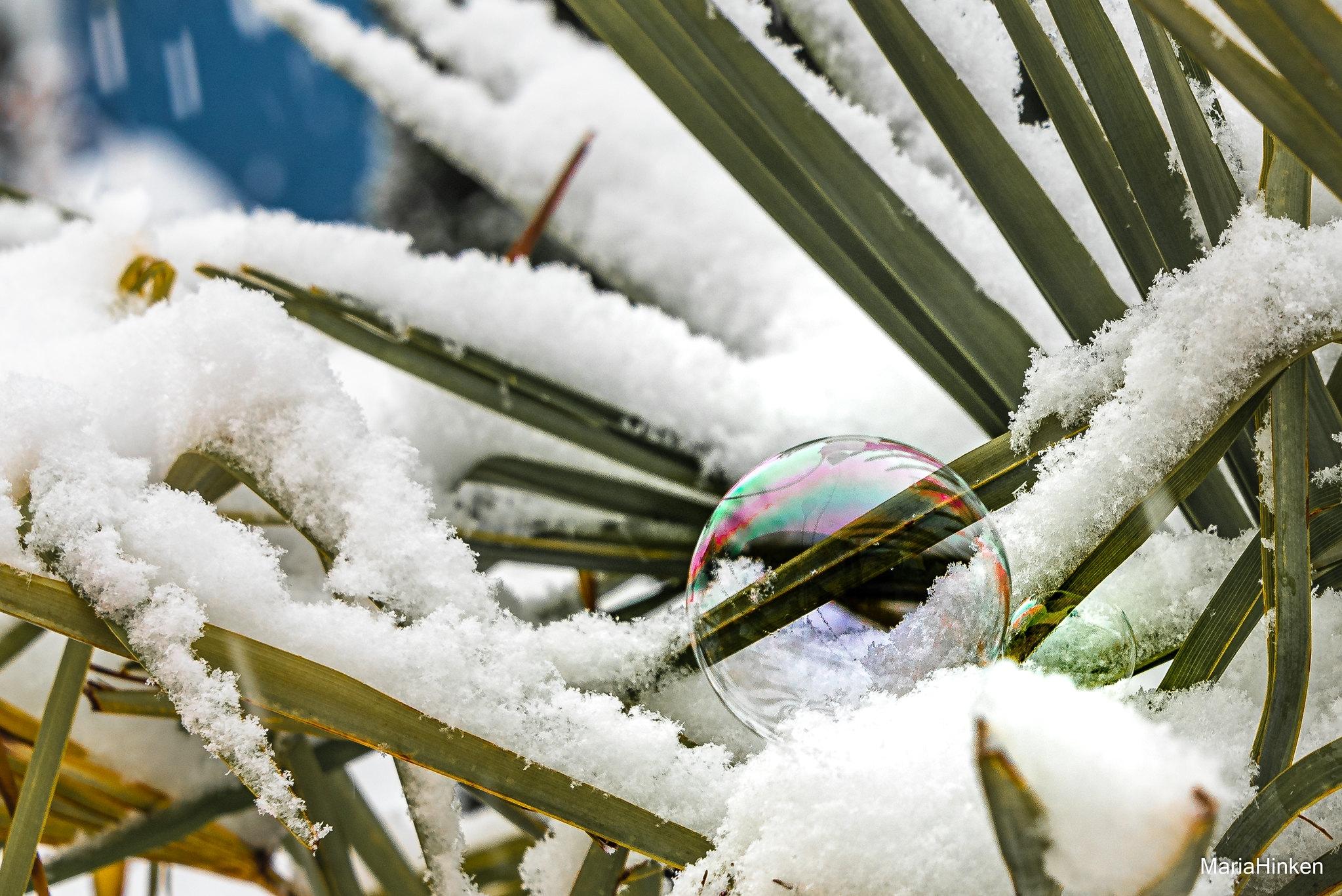 Winterlich_02-1_2021_005